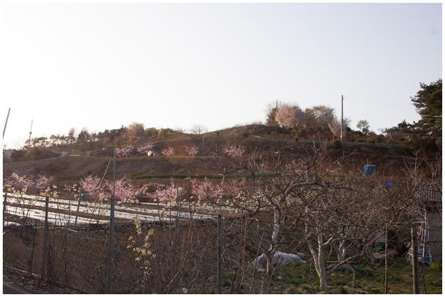 사천 금성리 토성지